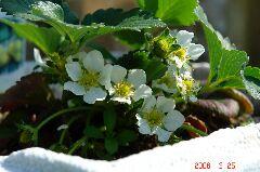 花がいっぱい咲いてます。クリックすると大きくなります。r