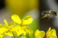 蜂にピントが合ってたのにね。クリックすると大きくなります。r