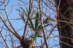 棕櫚の木2
