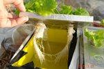 水耕美味タスの根っこ