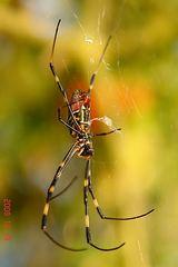 蜘蛛1。クリックして大きくしてくださいね。ただし自己責任でr1