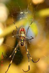 蜘蛛2。クリックして大きくしてくださいね。ただし自己責任でr1