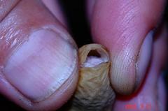 落花生の殻を割る。クリックして大きくしてくださいね。r1