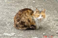 """人懐っこいネコちゃんなのでしょうか、""""にゃお?""""って声かけたらカメラ目線をしてくれました。考えてみたらこのブログでネコちゃん初登場です。。クリックすると大きくなります。r"""