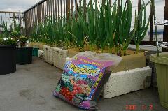 追肥の肥料はこんなものを使ってみました。クリックすると大きくなります。r