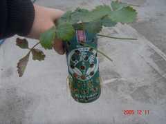培地はいつものペットボトル、中には赤玉土が入っています。クリックすると大きくなります。