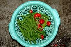 インゲン、キヌサヤ、イチゴを収穫。クリックすると大きくなります。r