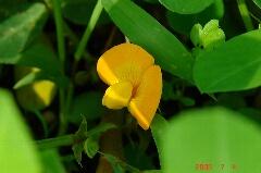 朝日に輝く黄色い花でした。クリックすると大きくなります。r