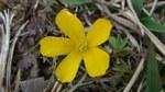 小さな花8