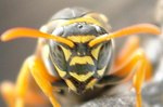 アシナガ蜂7