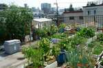 屋上コンテナ菜園東側