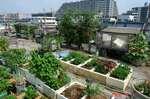 屋上コンテナ菜園南東側