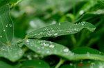 落花生に水滴1