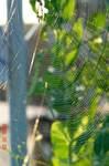 くもの巣2