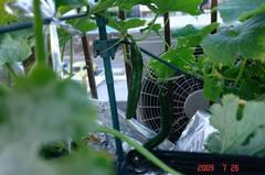 水耕栽培フリーダム。クリックして大きくしてくださいね。r1