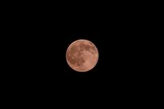 十六夜の満月。クリックして大きくしてくださいね。r1