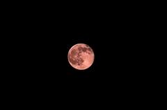 満月。クリックして大きくしてくださいね。r1