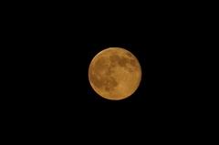 8/25の十六夜の満月。クリックすると大きくなりますR1。